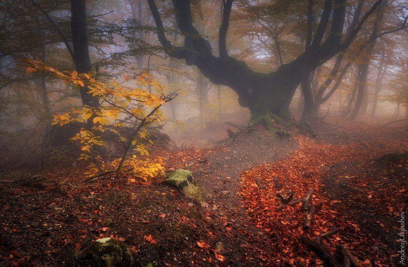 крым, демерджи, осень, лес, туман Тропинки осениphoto preview