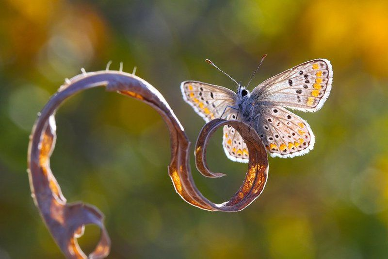 nature animal butterfly macro canon autumn  lightsphoto preview
