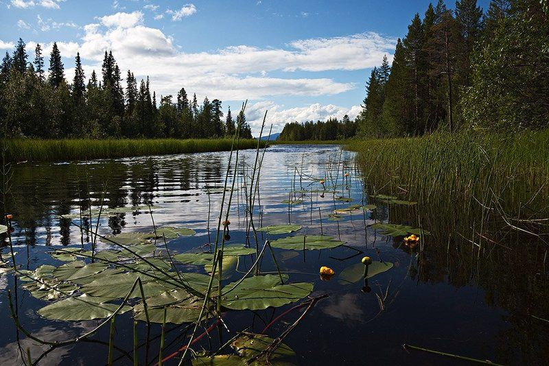 пейзаж,север,ручей,лето Верес ручей....Июль.photo preview