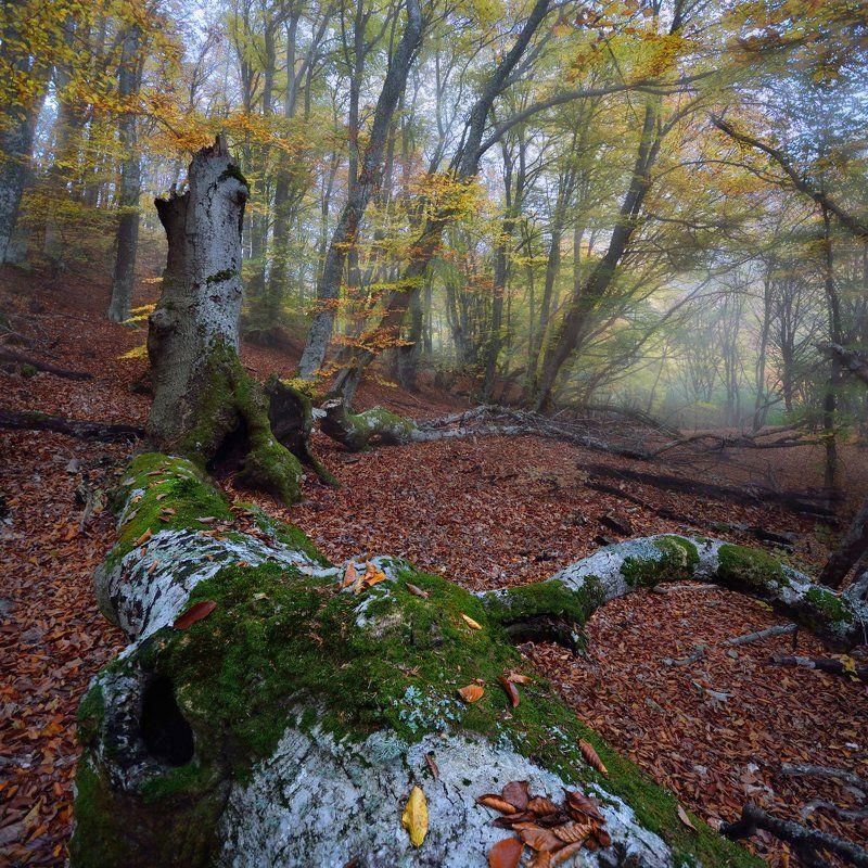крым, лес, осень В осеннем лесуphoto preview