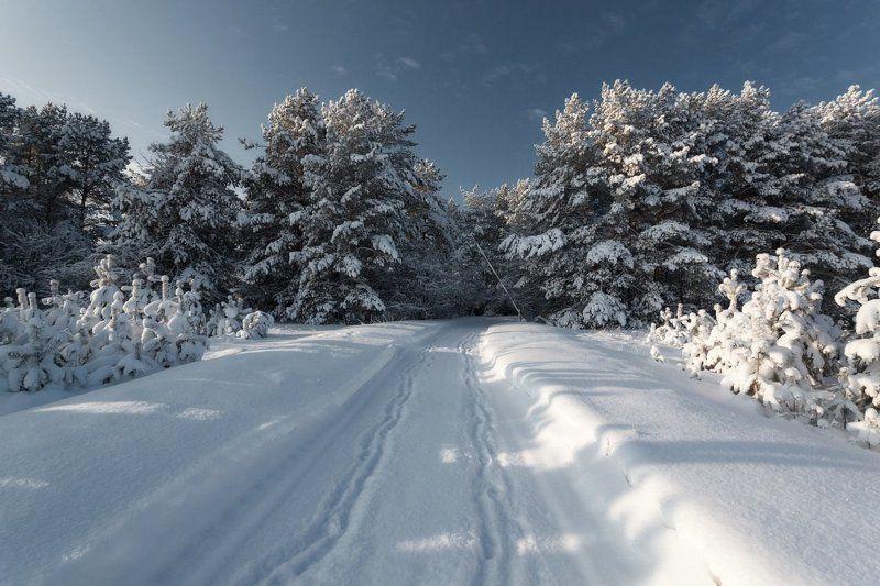 Лес сосны дорога снег сугробы шлагбаум зима мороз Морозный шлагбаумphoto preview
