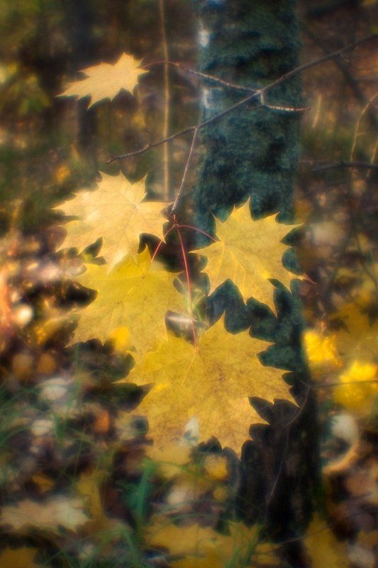 фото, монокль, monolens, pictorial, pictorealism, пиктореализм, мягкорисующая оптика Мягкие осенние краскиphoto preview