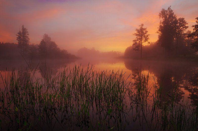 morning, sunrise, mist, lake, reflections, summer Morning secretsphoto preview