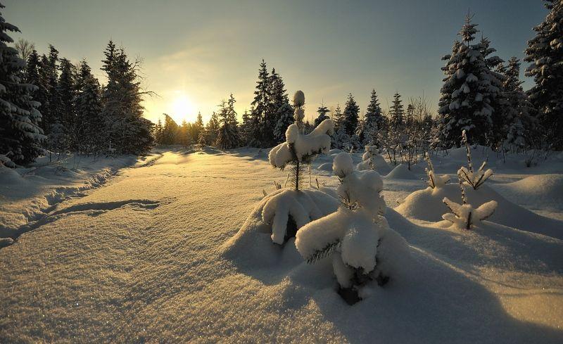 Зимними тропамиphoto preview