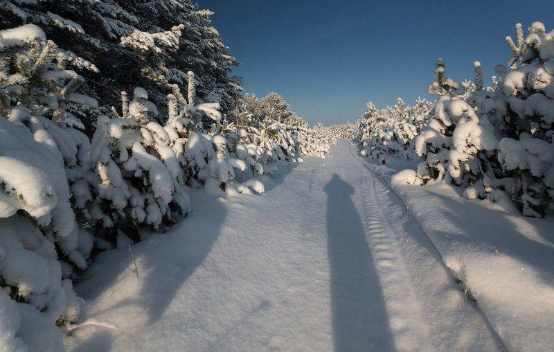 Снег сугробы просека сосны лес тень зима мороз  По морозной стрелкеphoto preview