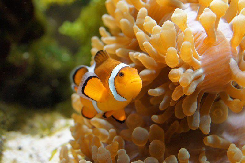 рыба,отпуск,вода finding Nemo...photo preview