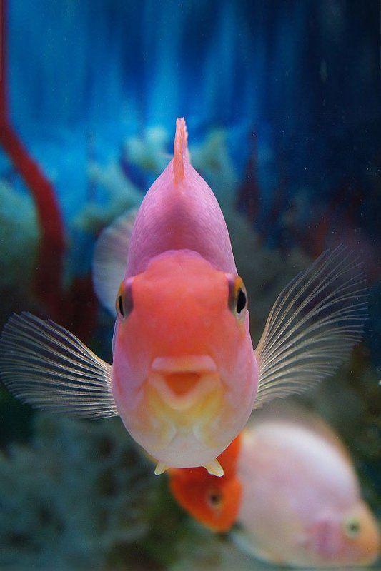 рыбы,вода, photo preview