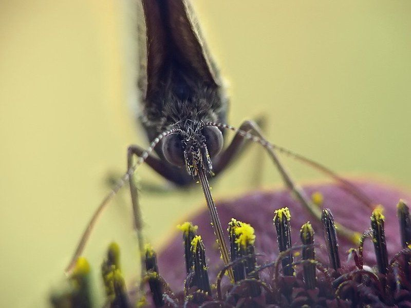 бабочка, жара, лето жараphoto preview