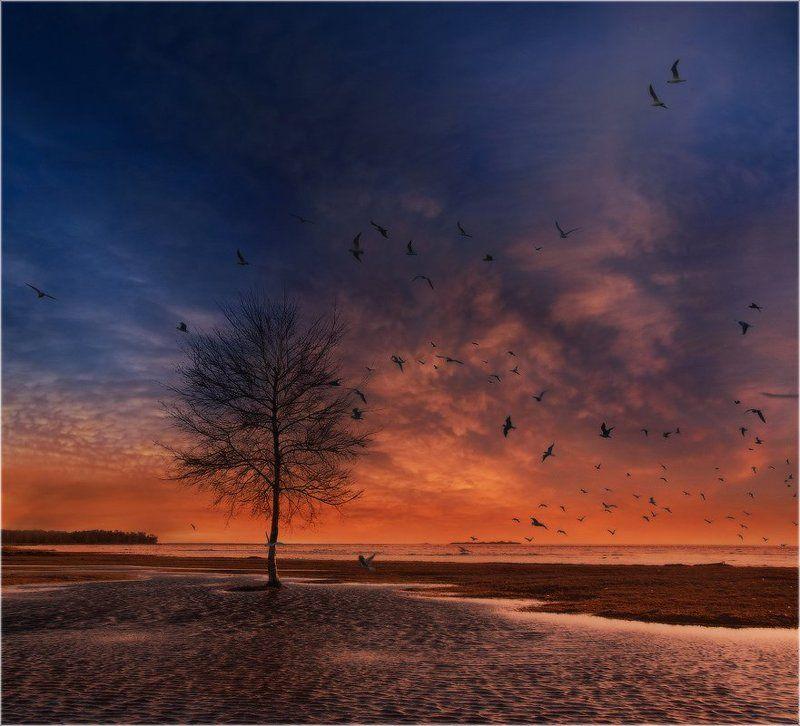 Птичий переполох в Дюнахphoto preview