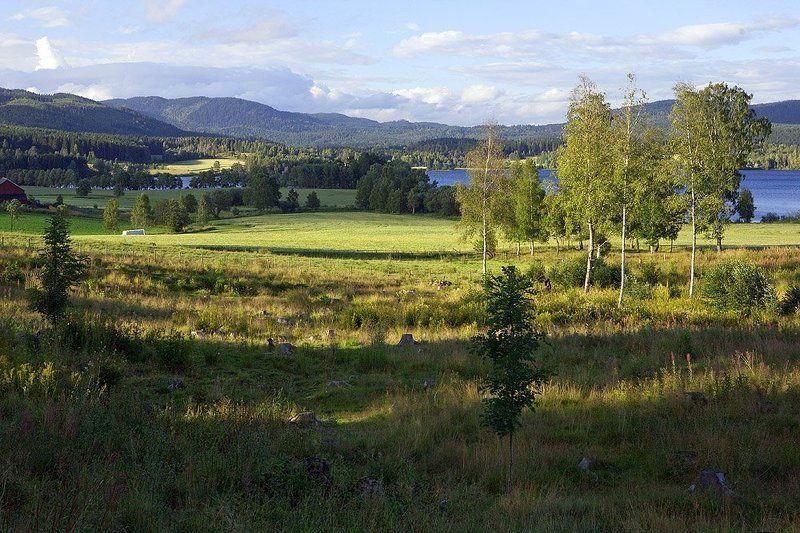 норвегия, осло, пейзаж, поле, лес, горы, лето Норвежские зарисовки - 2photo preview