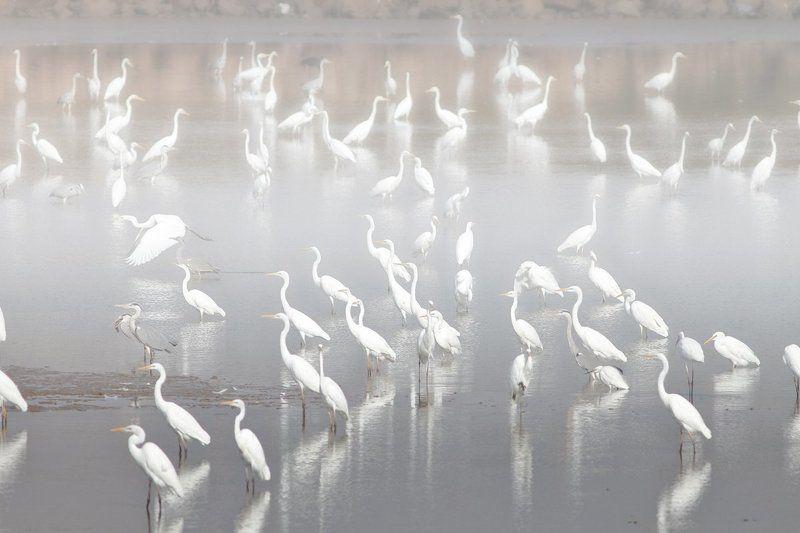 animals,birds,herons,fish,lake, 7d, 400mm, животные,птицы,рыба,цапли,озеро Озеро цапельphoto preview