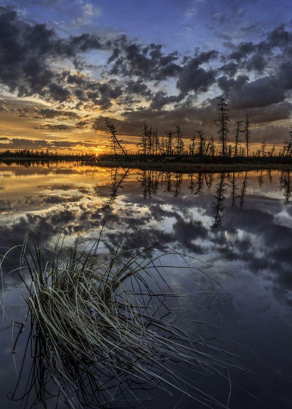 ямал, тундра, пейзаж, болото, россия, canon, закат, ночь, уренгой, новыйуренгой Белые ночи яркие очень фото превью