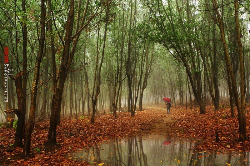 Dang Tuan Trung, Frank Dang Little rainphoto preview