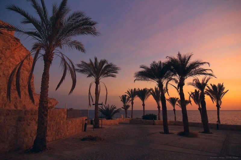 Египет, пальмы, свет, солнце, море, закат. вечер,  Египетские краскиphoto preview