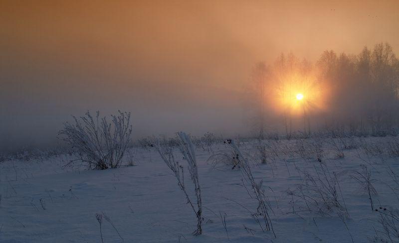 зима, снег, белый, пейзаж, лес, деревья, закат, солнце Misty Sunsetphoto preview