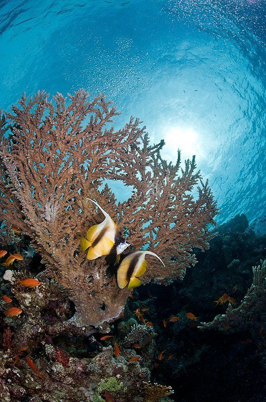 море, рыба, подводная съемка, красноморская кабуба, коралл, солнце, пара love storyphoto preview
