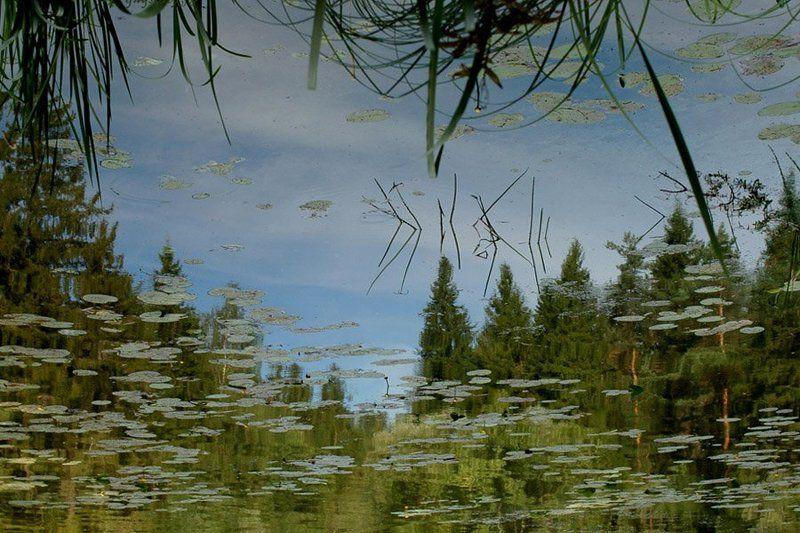 затон, вода, волга, тверская область, лисицкий бор, кувшинки Затонphoto preview