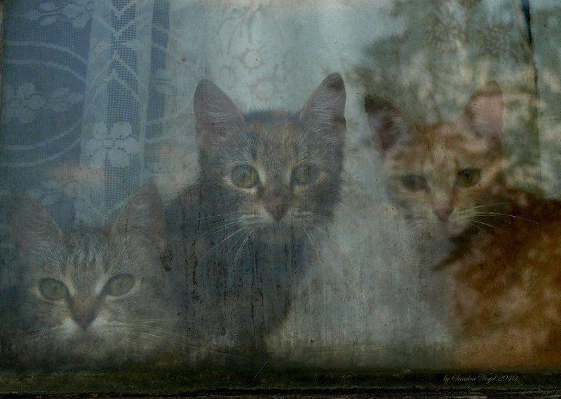 заоконные, кошки, коты, окно Заоконныеphoto preview