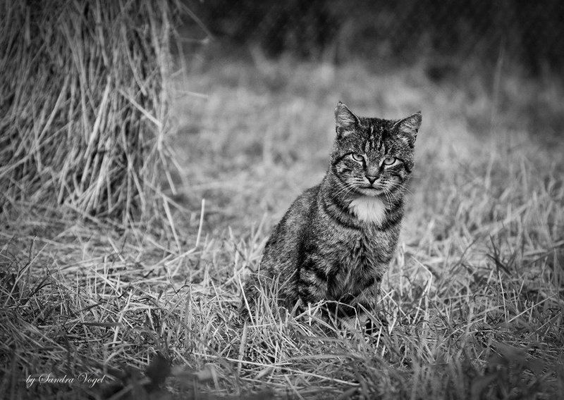 хозяин, сеновал, кот Хозяин сеновалаphoto preview