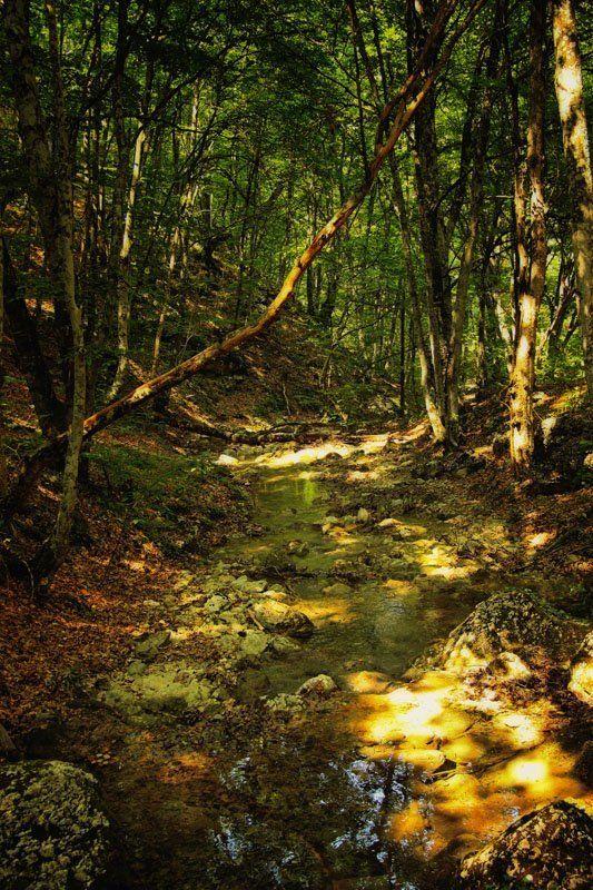 река, лес ***photo preview