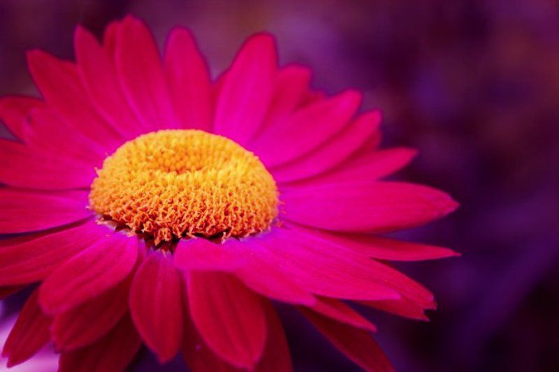 flower Flowerphoto preview