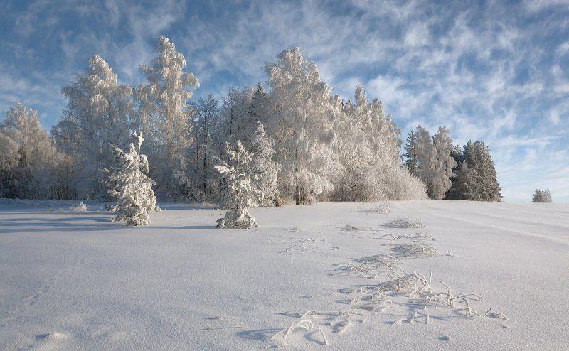 Снег иней сугробы лес облака кружева зима мороз Кружева морозного лесаphoto preview