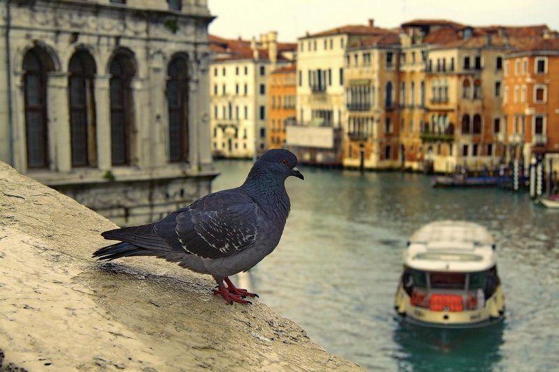 Символы Венецииphoto preview