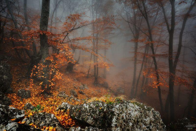 И на камнях растут деревья ...photo preview