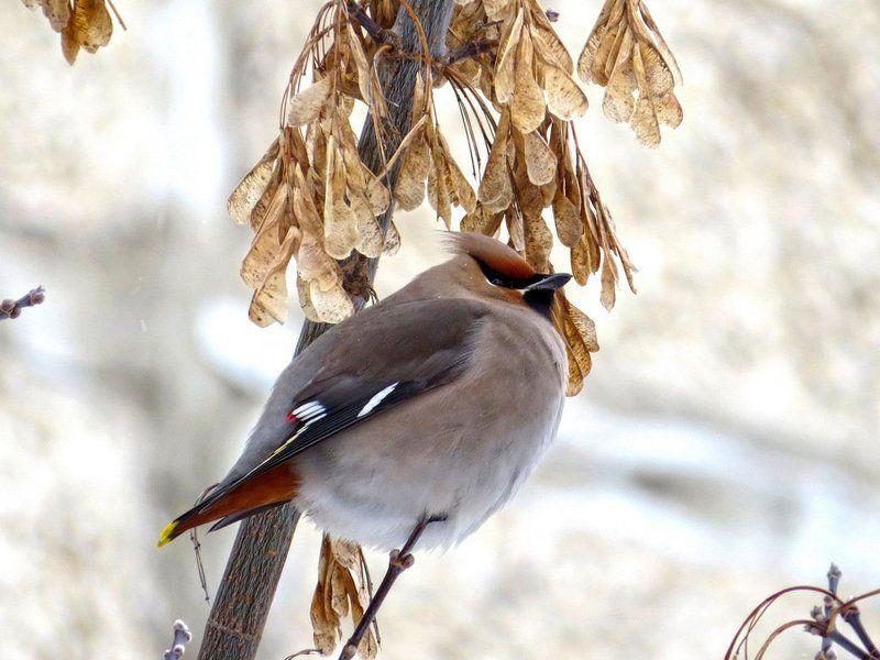 листопад Птицы photo preview