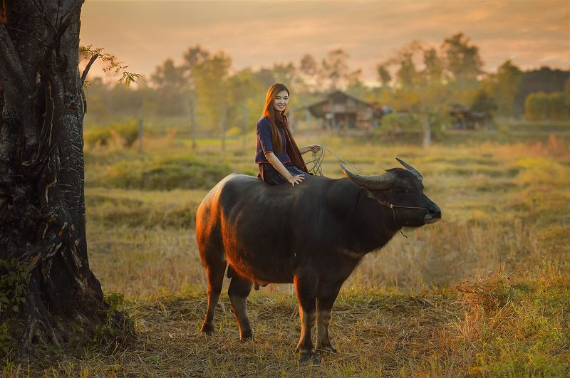 thailand,portrait,thai,asia,asian,woman,worker,buffalo,field,sunset, Beautiful Worker photo preview