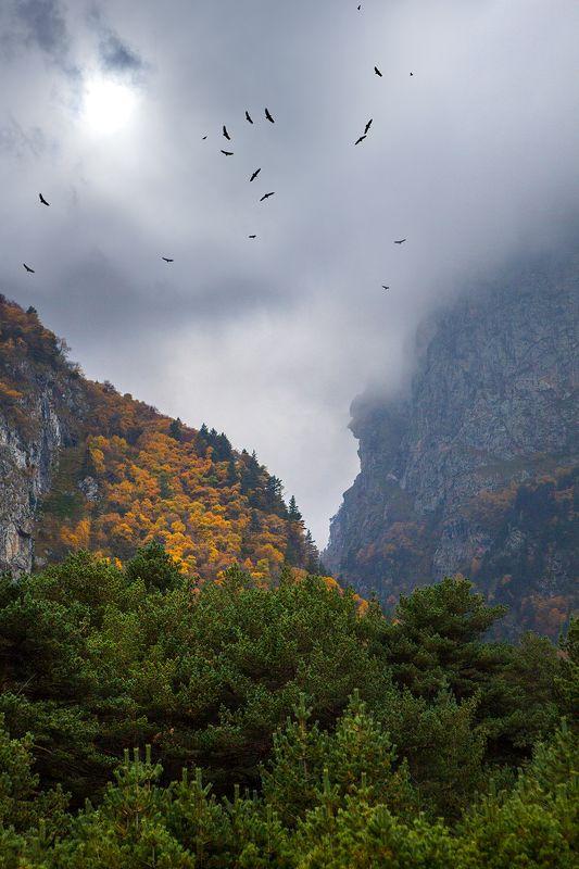 горы, кавказ, ущелье, черек, кабардино-балкария В гостях у хозяев гор...photo preview