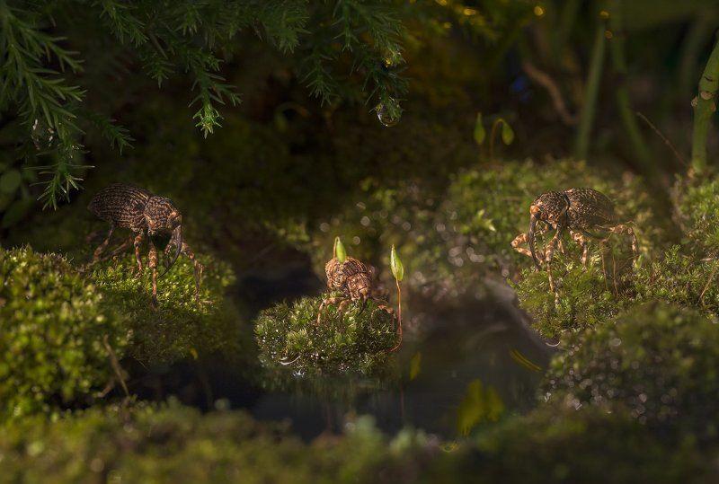 Слоны на водопое!photo preview