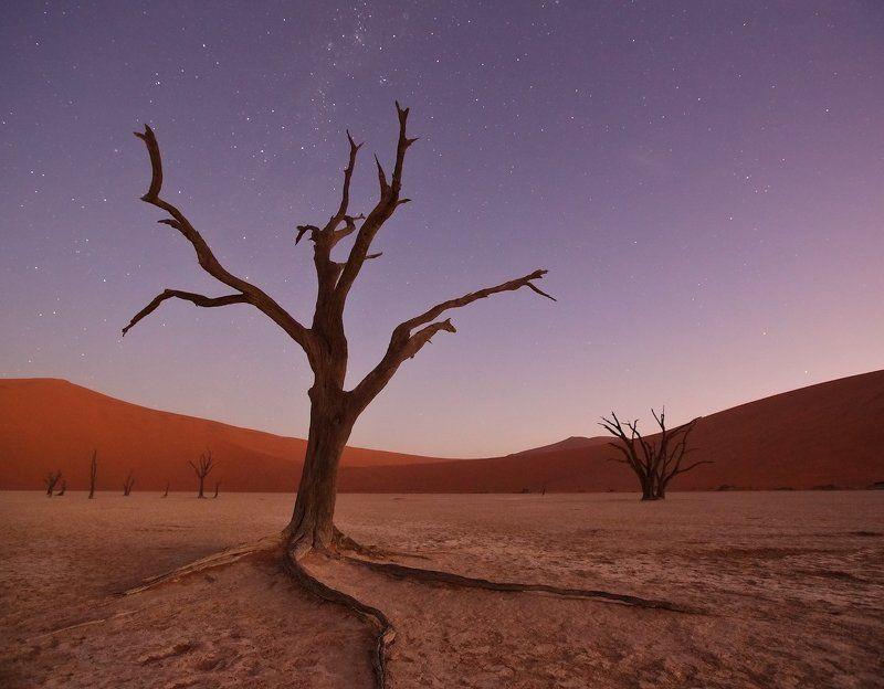#loveafrica, mc, namibia, намибия, dead vlei, namib naukluft national park, west africa африканская колыбельнаяphoto preview