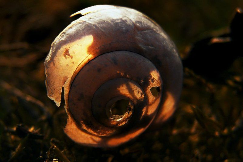 wake,macro,snail,kiev,zeiss,light, златни спомениphoto preview