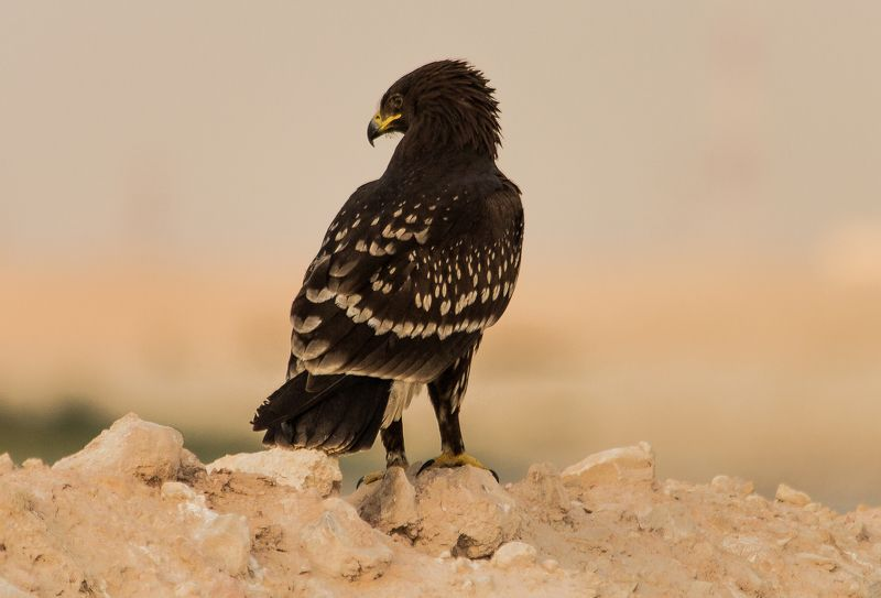 Eagle Eyephoto preview