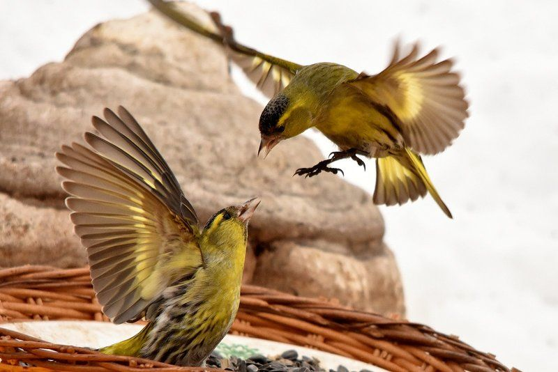 листопад Птицы на кормушкеphoto preview