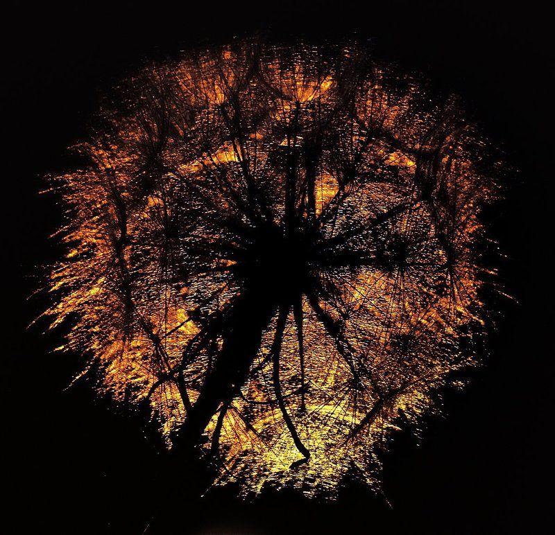 wake,macro,dandelion,light,sony,eleven, Levende Ild ©photo preview