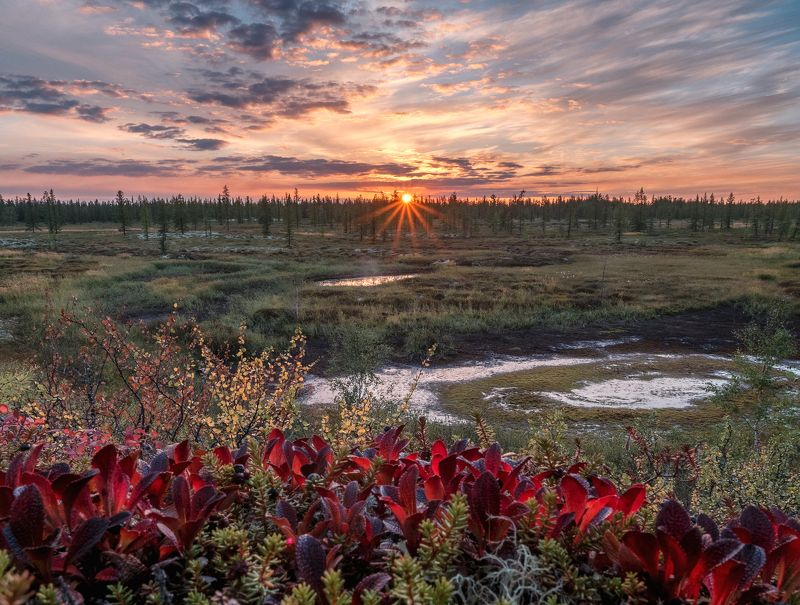 ямал, тундра, лето, закат, olympus, пейзаж, россия Симфония летнего вечера фото превью