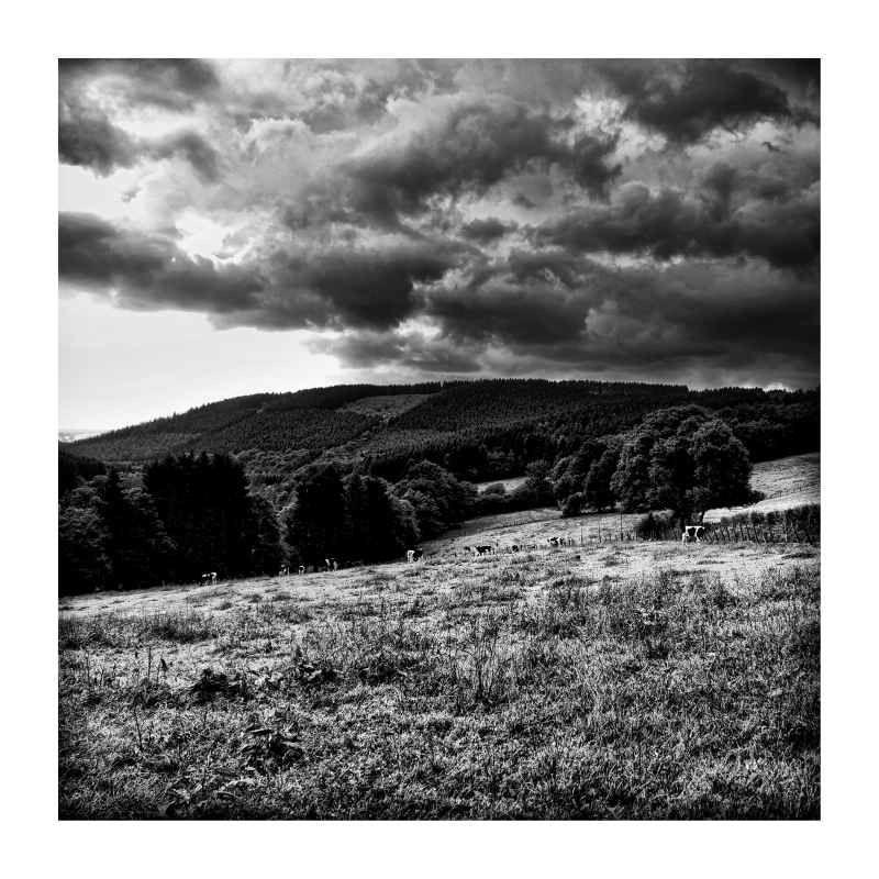 небо, горы, бельгия, арденны, пейзаж, фото, черно-белый Небо. Горы и коровы(если приглядеться)photo preview