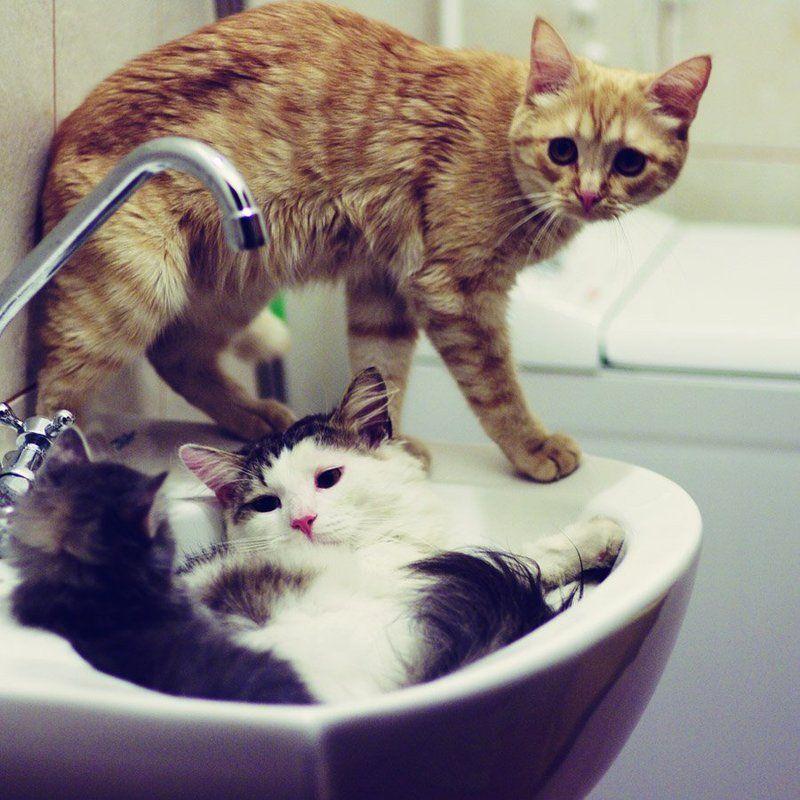 Как то в ванной собралась вся семьяphoto preview