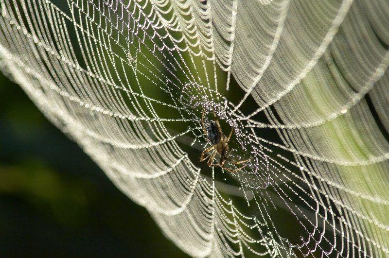 паутина, роса Утренняя паутинкаphoto preview