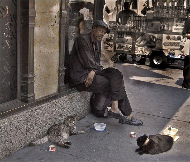 америка, нью-йорк, негр, кошки, черный, афро-американец, свобода, нищий Наконец-то свободен!?photo preview