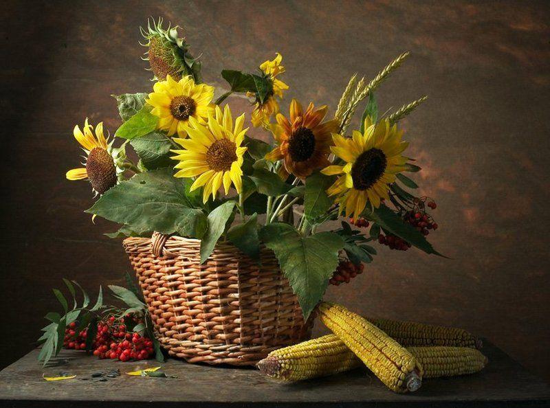 цветы,подсолнухи,ягоды,рябина,лето Любимые подсолнушки...photo preview