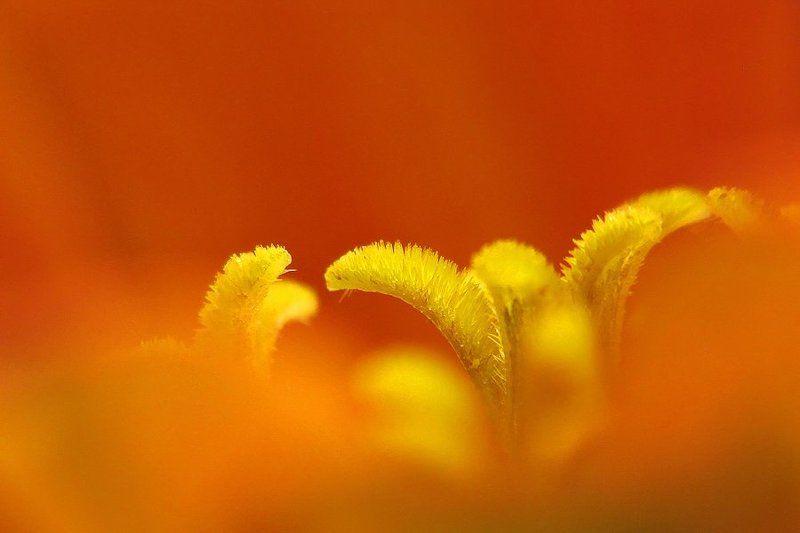 цинния Оранжевое настроениеphoto preview