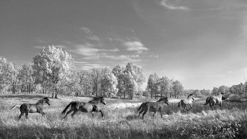 лошади, кони ***photo preview