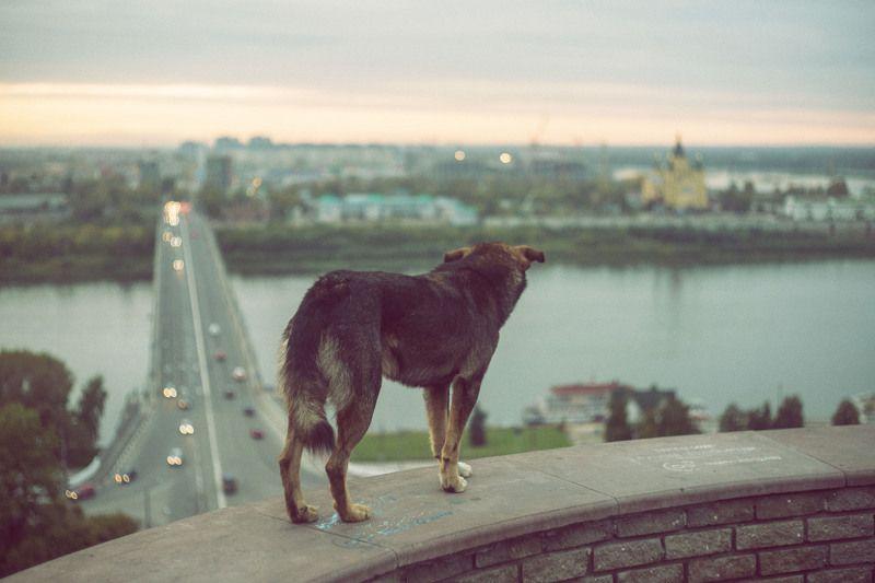Нижний Новгород Нижегородская Дворнягаphoto preview
