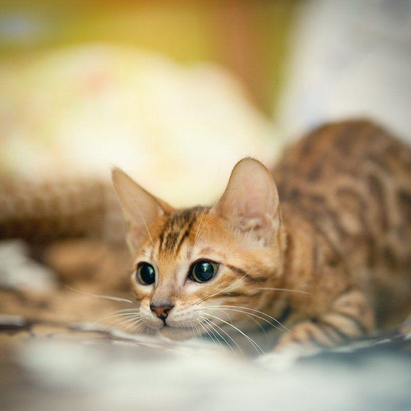 mr.filler Комнатный леопард )))photo preview