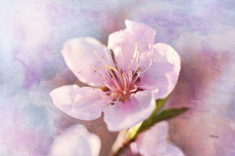 Уже веснаphoto preview