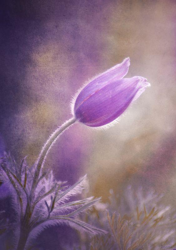 Фиолетовое настроениеphoto preview