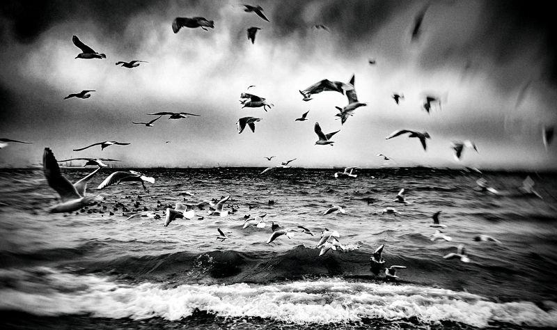 беготня, море, поток, суета, течение, хаос, чайки, черно-белое, шторм В суматохе дней....photo preview